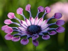 4 flori de gradina de o frumusete aparte