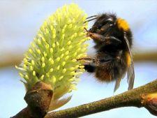 UE a interzis folosirea insecticidului Fipronil