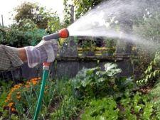 Moduri istete de udare a plantelor in timpul verii
