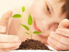 4 proiecte minunate de gradina pentru copii