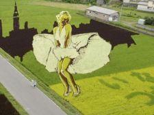 Fascinanta cultura de orez din Japonia cu imaginea legendarei Marilyn Monroe