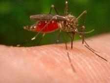 Virusul ucigas West Nile ar putea ajunge din nou in Romania