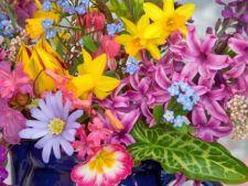Ce spune despre tine floarea ta preferata din gradina