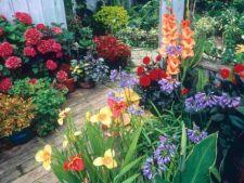 Cele mai bune 5 plante pentru ghivece