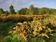 5 plante invazive care dezechilibreaza ecosistemul