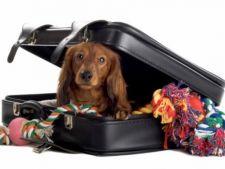 Lucruri necesare in bagajul de vacanta al animalului de companie