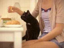 Pisica pofteste la mancarea ta? 6 alimente uzuale pe care le poti da pisicii
