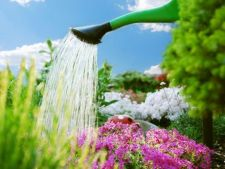 Cum sa economisesti apa in gradina in aceasta vara