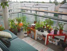 Secretele amenajarii unei gradinii urbane