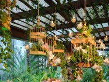 6 aranjamente florale in colivii, ideale pentru infrumusetarea gradinii