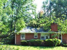 Arbori a caror radacina afecteaza fundatia casei