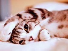 Vrei sa ai o pisicuta fericita? Lucruri pe care pisicile le adora