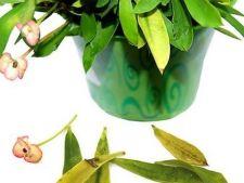 6 semne ca plantele tale sunt triste si bolnave