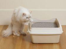 4 moduri de a folosi in casa nisipul din litiera pisicii