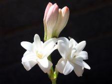 5 flori cu cea mai dulce aroma din lume