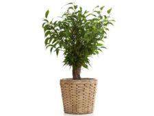 Cele mai bune plante pentru purificarea aerului si mentinerea sanatatii