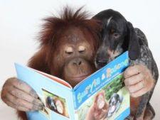Prietenii nebanuite intre specii diferite de animale