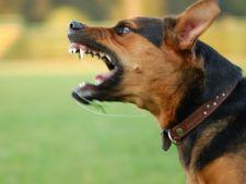 10 statistici despre muscaturile de caine care te vor surprinde