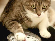 Cauze ale scaderii bruste in greutate la pisici