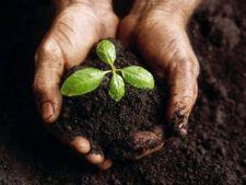 8 materiale pe care sa nu le folosesti pentru compost