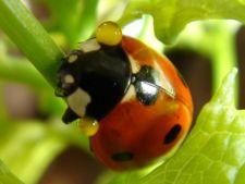 Insecte bune si insecte daunatoare care