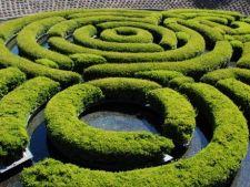 Cum sa-ti construiesti un labirint misterios in gradina