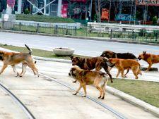 Copil de 4 ani, omorat de caini in Parcul Tei