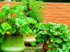 6 idei istete pentru cultivarea legumelor in ghivece