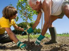 7 reguli pentru plantarea corecta a pomilor
