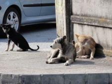 Referendumul pentru cainii maidanezi costa 6 milioane de lei