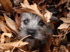 Pregatirea animalului de companie pentru toamna: 4 sfaturi binevenite