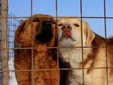 O noua lege privind cainii comunitari, adoptata astazi in Parlament?