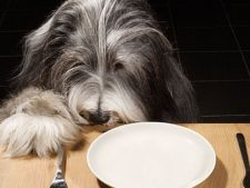 Mancare gatita pentru caine: sfaturi de preparare si idei de retete
