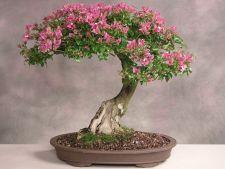 Secretele prepararii pamantului pentru bonsai acasa