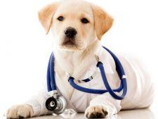 4 metode simple de prevenire a cancerului la caini