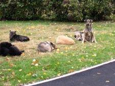Dezvaluiri socante facute de un nou martor in cazul copilului ucis de caini