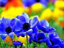 Ciclul de viata al unei plante cu flori: tu ii cunosti etapele?