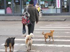 Primele sanctiuni in cazul persoanelor care abandoneaza cainii maidanezi adoptati