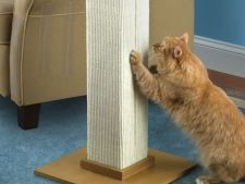 Cum inveti pisica sa nu mai zgarie piesele de mobilier