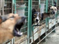 Curtea Constitutionala a decis: cainii maidanezi vor fi eutanasiati