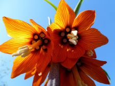 4 bulbi de flori care tin la distanta rozatoarele de gradina ta