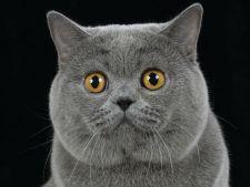 Sute de pisici din rase exotice la Plaza Romania