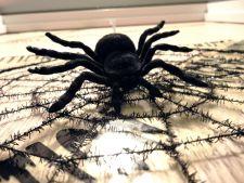 Halloween: Cum sa-ti decorezi usa de la intrare cu un paianjen urias