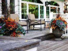 3 plante superbe care iti anima gradina chiar si in sezonul rece