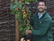 TomTato, planta care produce si cartofi, si rosii