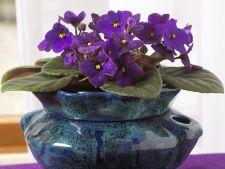 Plante decorative prin flori sau plante decorative prin frunze: care este cea mai buna varianta pent
