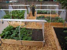 Cum pregatesti gradina de legume pentru iarna