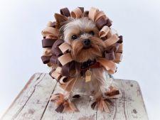 5 costume de Halloween pentru animalute la moda in 2013