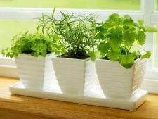 Cum sa plantezi ierburi aromatice in interior pe timp de iarna
