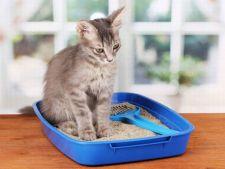 Alegerea litierei pisicii - de ce trebuie sa tii cont?